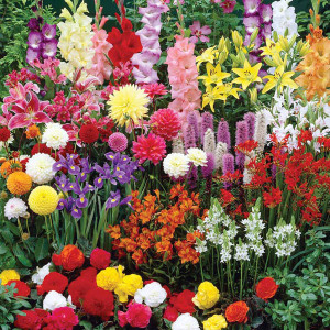 Bulb-Flowers_sml